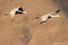 Dawn Patrol Cranes