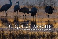 Bosque Presentation Title Page