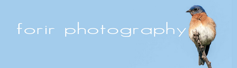 Forir Photos